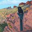 Magpie in Colorado_copyrighted nature illustration_JMTurley