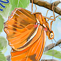butterfly activities_copyrighted nature illustration_JMTurley