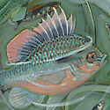 fish in a bucket_copyrighted nature illustration_JMTurley