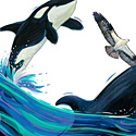 Orca and Osprey_copyrighted nature illustration_JMTurley