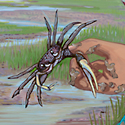 crab_copyrighted nature illustration_JMTurley