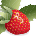 strawberry_copyrighted nature illustration_JMTurley