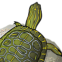 turtle_copyrighted nature illustration